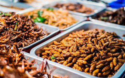 Insectos, nuestras proteínas del futuro